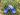 Barnträskor Blåbär